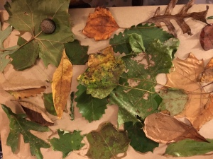 Our leaf collage